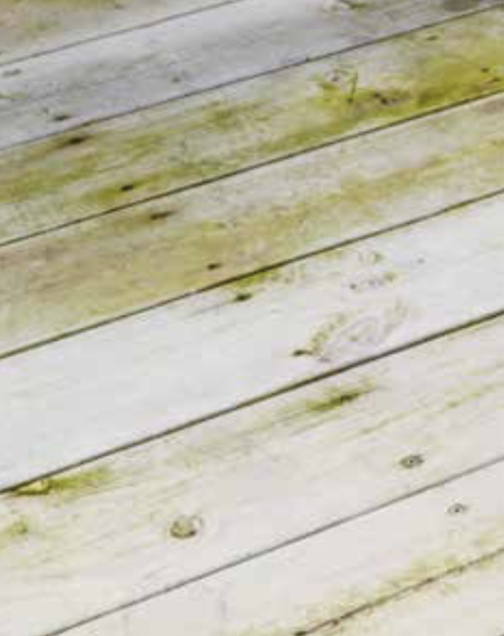 Jotun Demidekk Terrasslasyr schimmel en algen